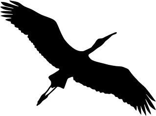logo_zhuravl_H240.png